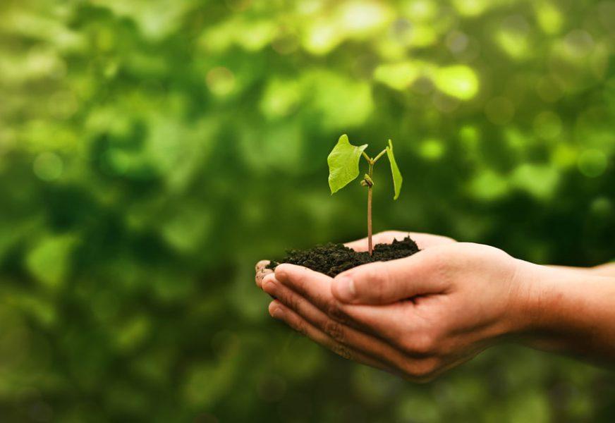 Bio e sostenibilità